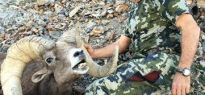 Win a NV Dream Tag and come home with a Nelson Bighorn Sheep Trophy like Sal.